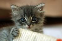 A lovely cute kitten. Awwwww!