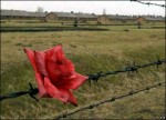 Auschwitz-Birkenau Today