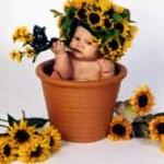 flower_pot_baby